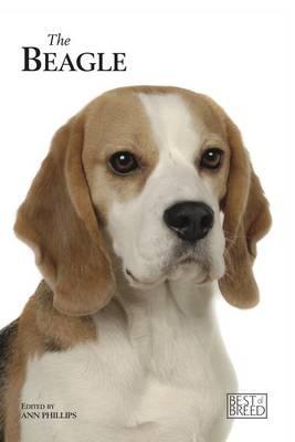 Beagle By Phillips, Ann